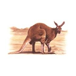Red Kangaroo 75mm (15)