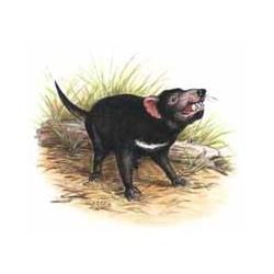 Tasmanian Devil 50mm(24)