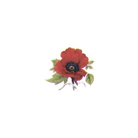 Autumn poppy 33 x 27 mm(16)
