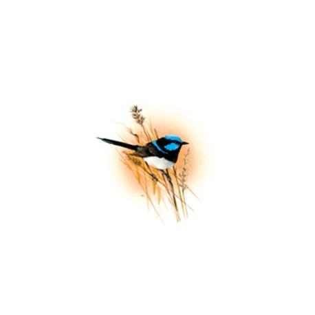 Blue Wren 25mm
