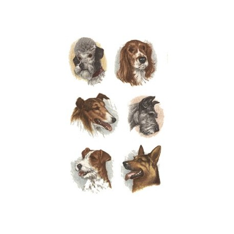 DOGS HEADS SET OF 6
