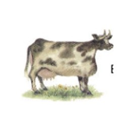 *** SALE 50% OFF *** COWS (18) 40 x 31MM