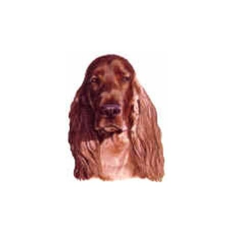 Irish Setter 40mm NB