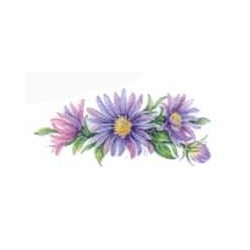 Michaelmas Daisy 70mm(6)