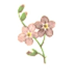 PINK FORGET ME NOT 20X15 MM