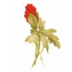 Poppy Fair 45mm x 25mm (12)