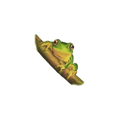 ** SALE 50% OFF DAINTY GREEN TREE FROG 75mm (6)