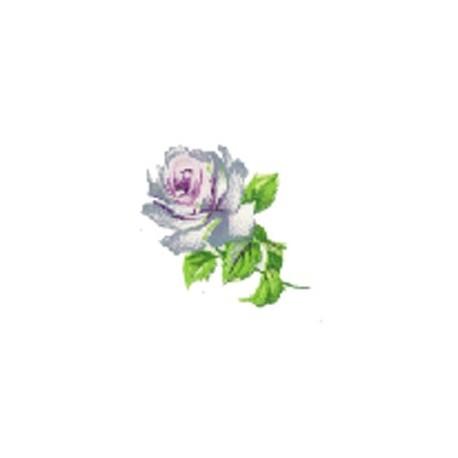 ROSALINE 25X20(182)