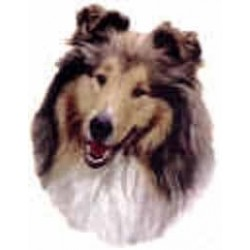 Rough Collie 25mm No B/G