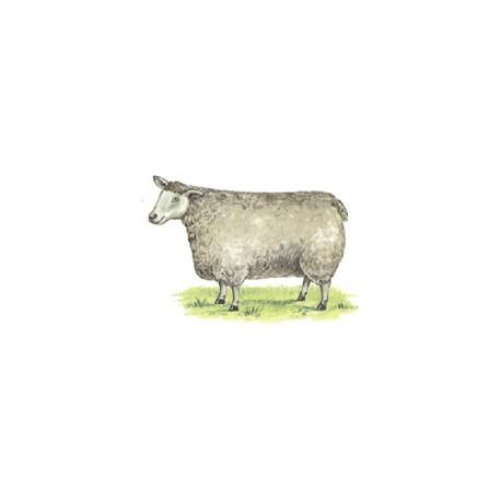 SHEEP 56X40MM ( 2) 2.SASP4
