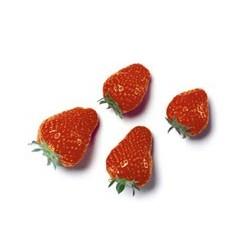 Strawberry 25mm