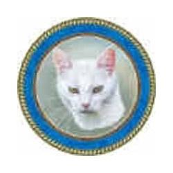 White short hair cat 150mm