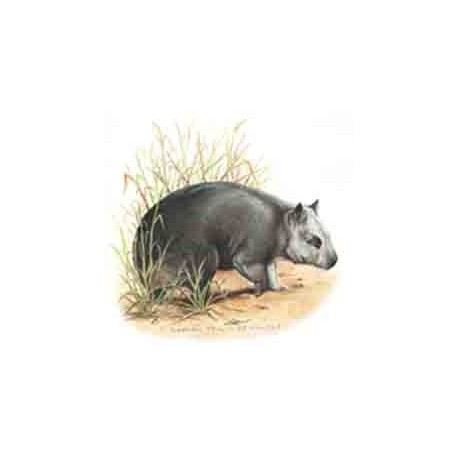 Wombat 25mm (70)