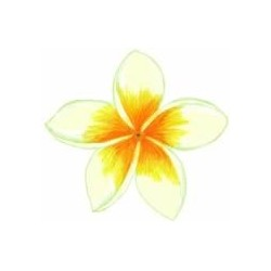 ** SALE 50% OFF Frangipani 50mm (12)