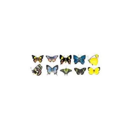Australian Butterflies 50mm (10)