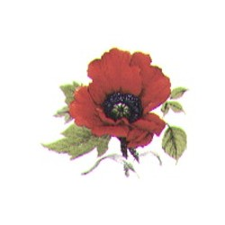Autumn poppy 33 x 27 mm(4)