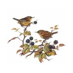Birds Wren 40mm (4)