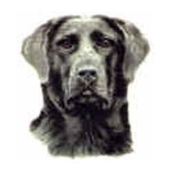 Black Labrador 25mm No B/G