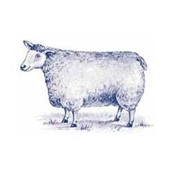 Blue Sheep Size 5 (8)