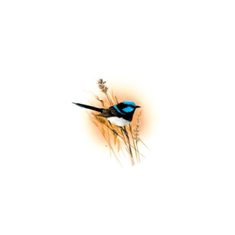 Blue Wren 50mm (24) - non-fire