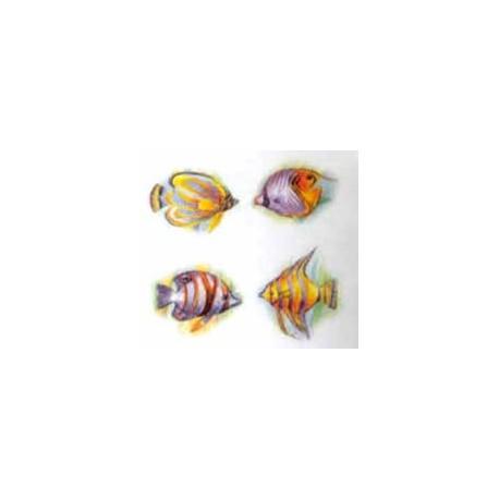 Cariibian Fish 35 x 25mm (80)