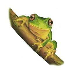 Dainty Green Tree Frog 45MM (25) - non-fire